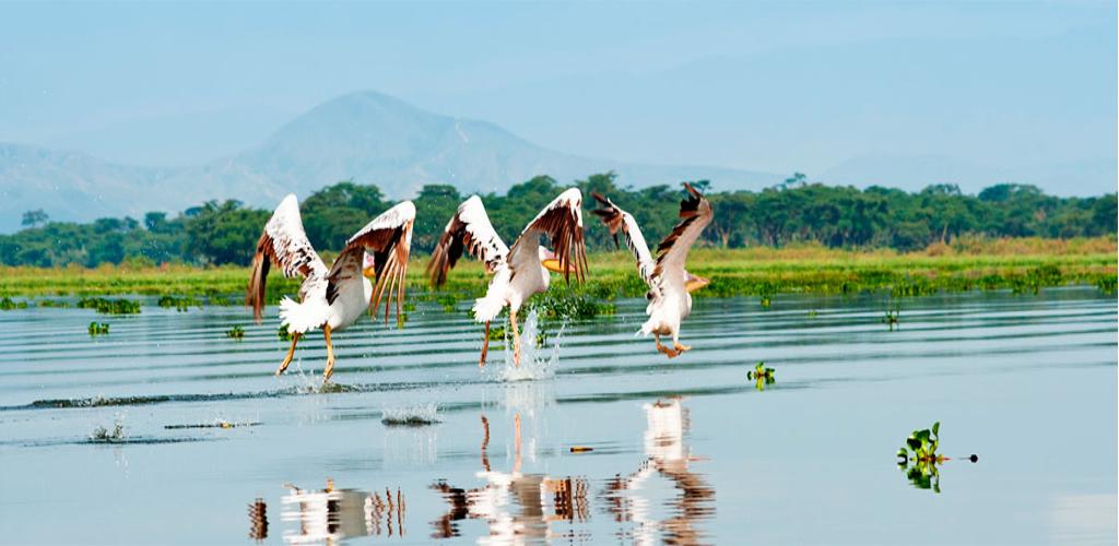 Lake Naivasha and Baringo