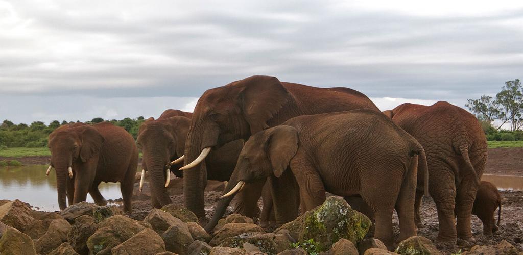Aberdare Park Kenya