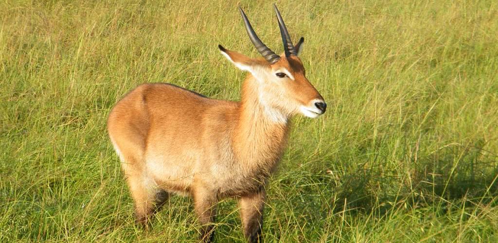 Kenya Uganda Safari