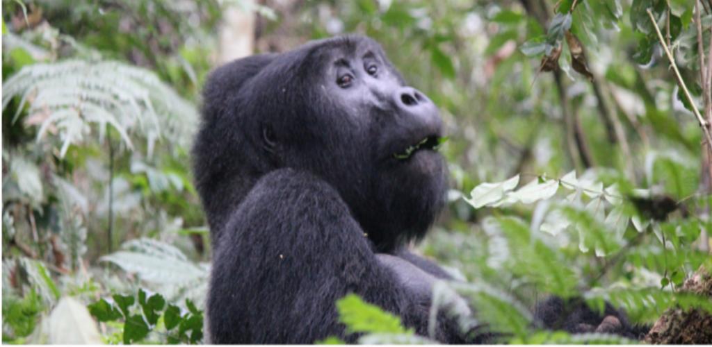 Rwanda Safari Adventure